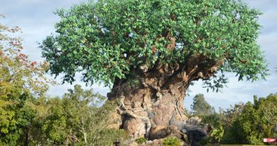 Best fastpasses for animal kingdom