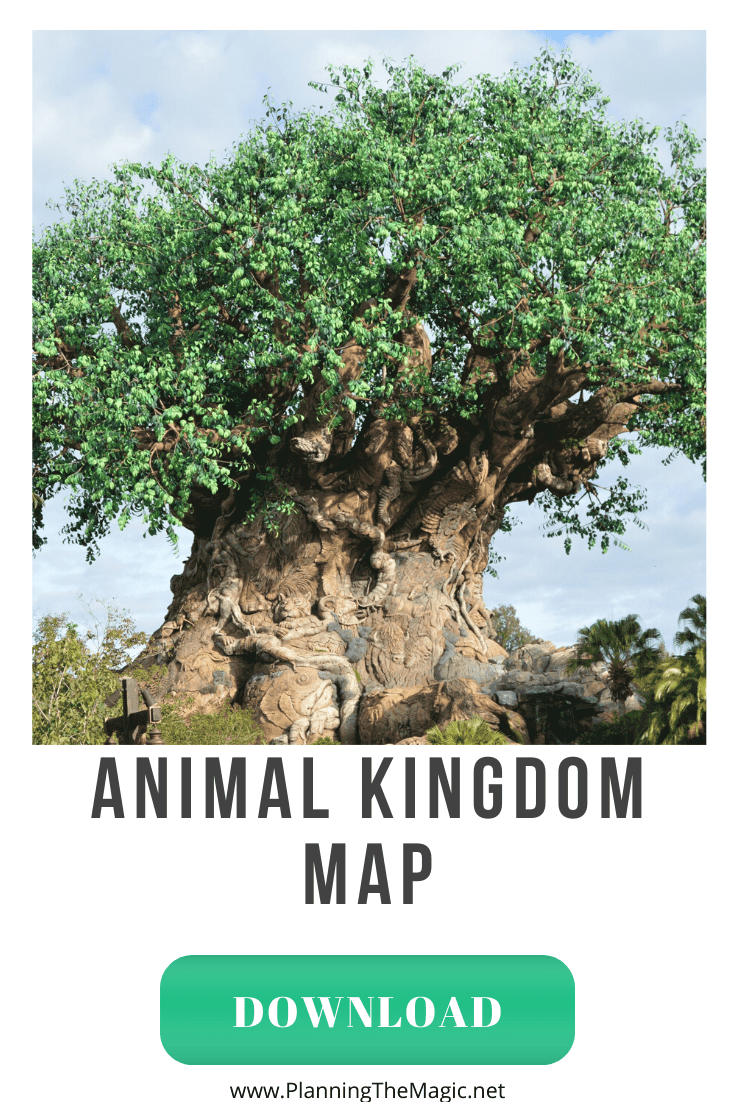 disney world animal kingdom map
